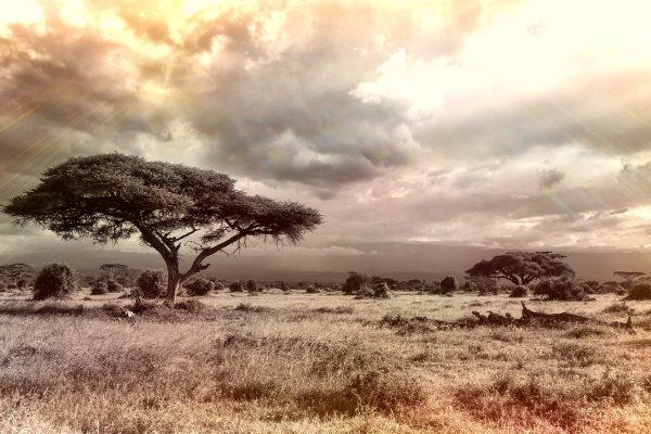 africa-944465_1280